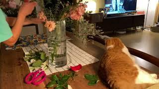 꽃과 고양이 #스코티쉬폴드