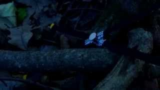 Jurassic Park - Return to Isla Nublar Toy Movie Trailer