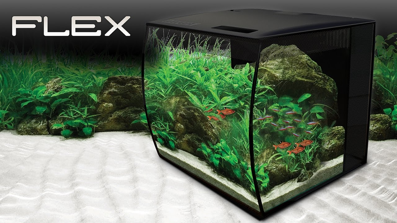 Fluval flex aquarium youtube for Fluval fish tank