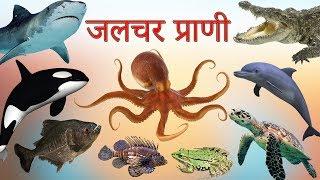 पानी में रहने वाले जानवर | Sea Animals Hindi | Water Animals Hindi | मछली के नाम | Fishes In Hindi