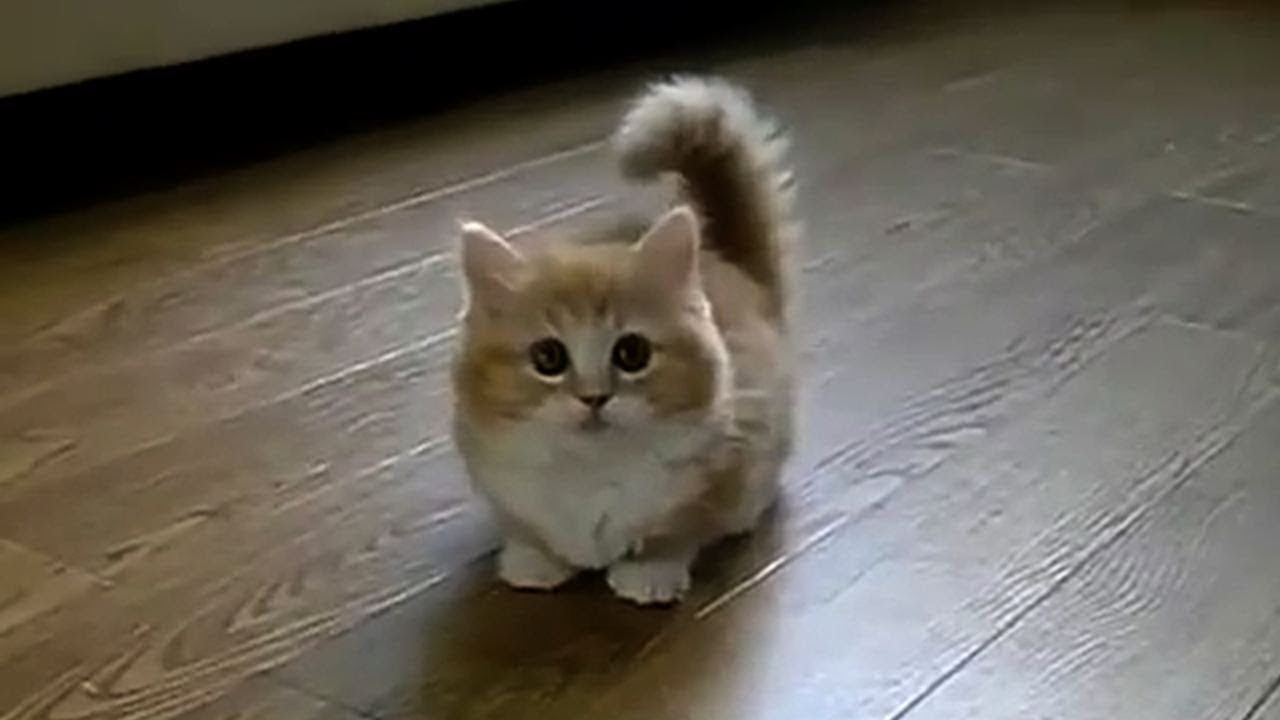 Sweet Cute Cats Video Compilation Youtube