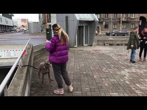 Pokemon GO. Raikou RAID. Near Art Cube. Estonia. Tallinn 2017