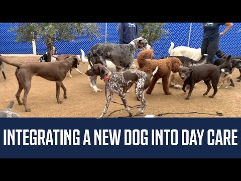 Integrating a New Dog Into Doggy Day Care