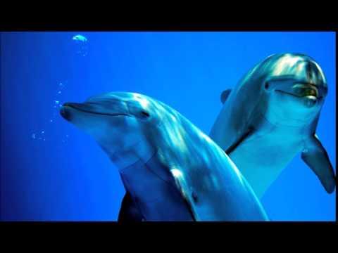 Angels & Dolphins(love, light, joy, peace, healing, awakening)
