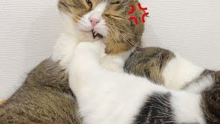 寝ぼけた息子猫の蹴りを顔面に食らってこうなりました…泣