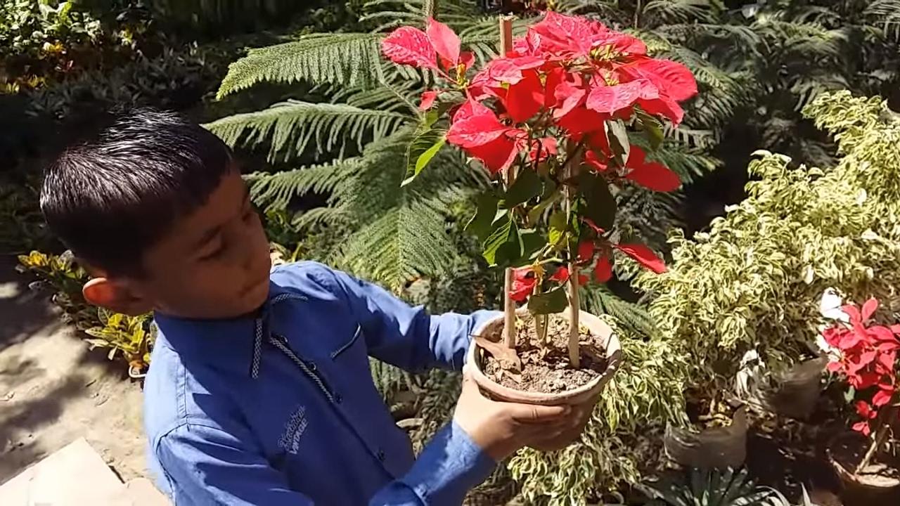 Visit A Nursery At Agra
