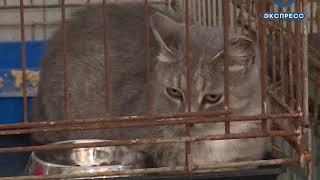 Пензенский приют для бездомных животных ищет помещение
