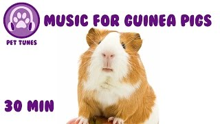 30 MINS! Guinea Pig Music, Music to Relax Your Pig! Relaxing Music for Pets