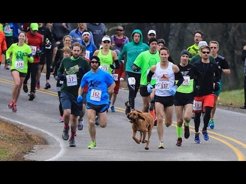 Randumb - Dog Accidentally Runs Half-Marathon After Being Let Out To Pee