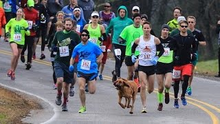 Dog Accidently Joins Half Marathon, Finishes Race In 7th Place