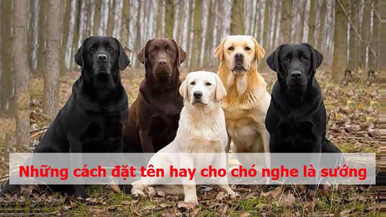 Những cách đặt tên hay cho chó nghe là sướng
