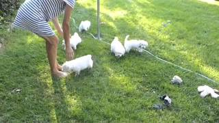 Puppies go Potty Outside