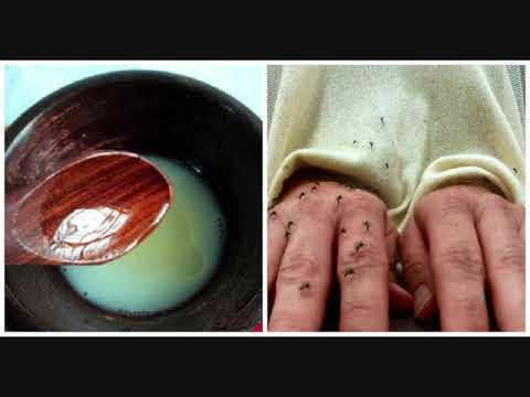 cara-membuat-obat-anti-nyamuk-oles