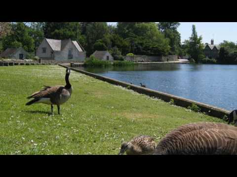 Melbourne Pool, Derbyshire. A Time-lapse recording of vintage tractors and Geese on May 31st 2009 HD
