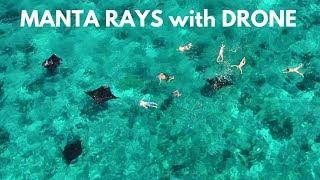 MANTA RAYS - DRONE - KOMODO, INDONESIA (인도네시아 코모도 국립공원 만타가오리 드론 촬영)