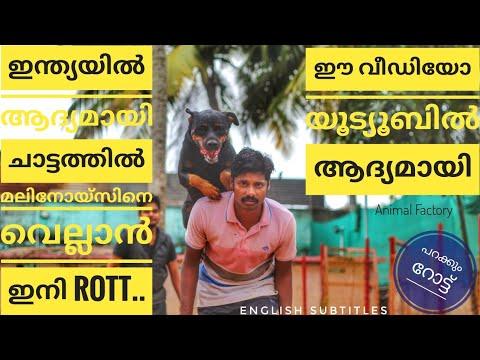 Rottweiler Training | Highest Jumping | Malayalam | Animal Factory