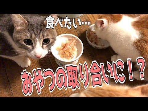 【猫だらけ】おやつを巡る猫たちの攻防!?食いしん坊だらけのおやつタイム!