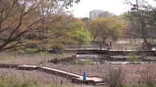 Япония.Апрельский парк Сёва в Тасикаве. Showa Memorial Park(, 2014-04-20T01:03:14.000Z)