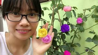 How to make a paper rose - Hướng dẫn làm hoa hồng bằng giấy nhún