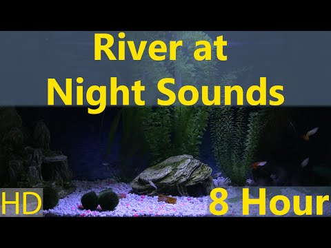 River at Night Sounds 8 Hour SomewhereAquarium 1080p HD