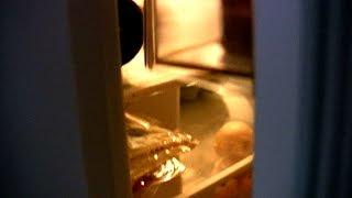 Sex Dwarf poops in my fridge!