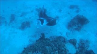 Snorkel Safari Lady Elliot Island Thumbnail