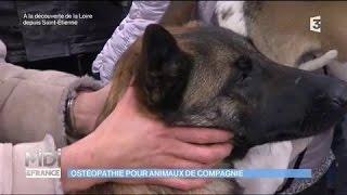 Ostéopathie pour animaux de compagnie