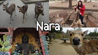 NARA・奈良   Buddha, Todaiji Temple and endless DEER (Travel Vlog #11)