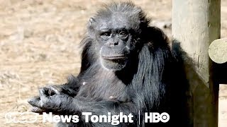 Chimp Haven & Denying LGBT Parades: VICE News Tonight Full Episode (HBO) thumbnail
