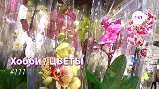 видео: 151#111 / Хобби Цветы / 08.02.2019 - ИКЕА (ХИМКИ). ОБЗОР