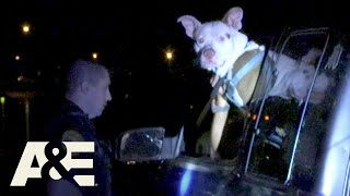 Live PD: Odd Way to Carry (Season 4) | A&E