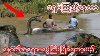 ပုံမှန်မဟုတ်သောအလွန်ကြီးမားသောဧရာမမွေများ 10 Abnormally Large Snake Sightings!