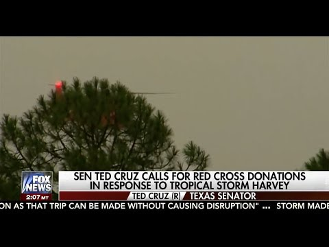 Sen. Ted Cruz on Harvey