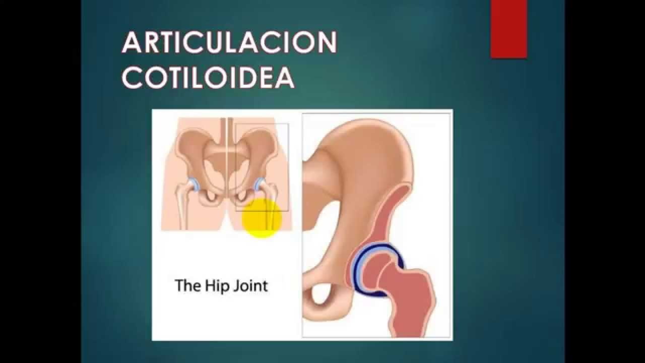 ARTICULACIONES Y MOVIMIENTOS - YouTube