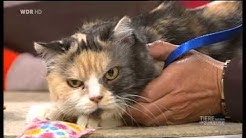 Die Katzen-Engel bei Tiere suchen ein Zuhause 2012