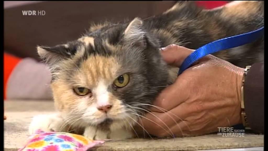 Die Katzen Engel Bei Tiere Suchen Ein Zuhause 2012 Youtube