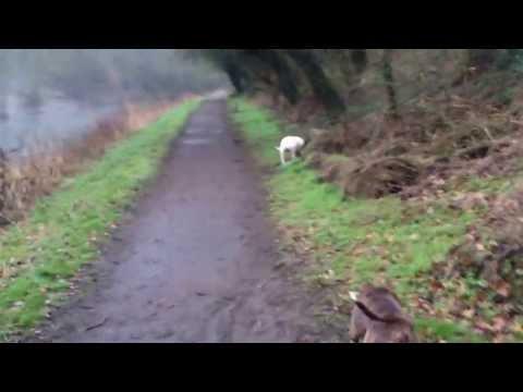 Dog Walking Market Harborough