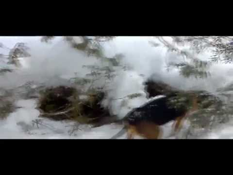 Maine Coyote Hunting With Dogs | Maine Blackwater Outfitters | 207.540.4101