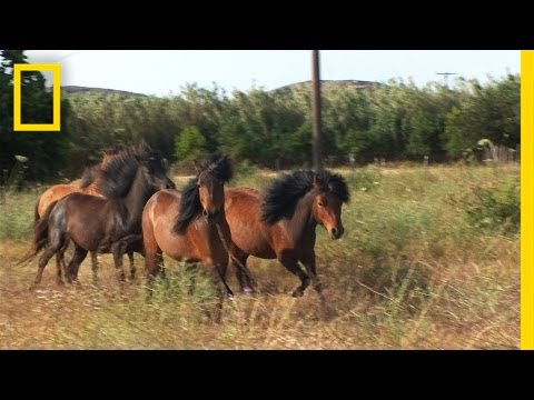 Tiny but Mighty: This Ancient Greek Horse Still Exists Today   National Geographic