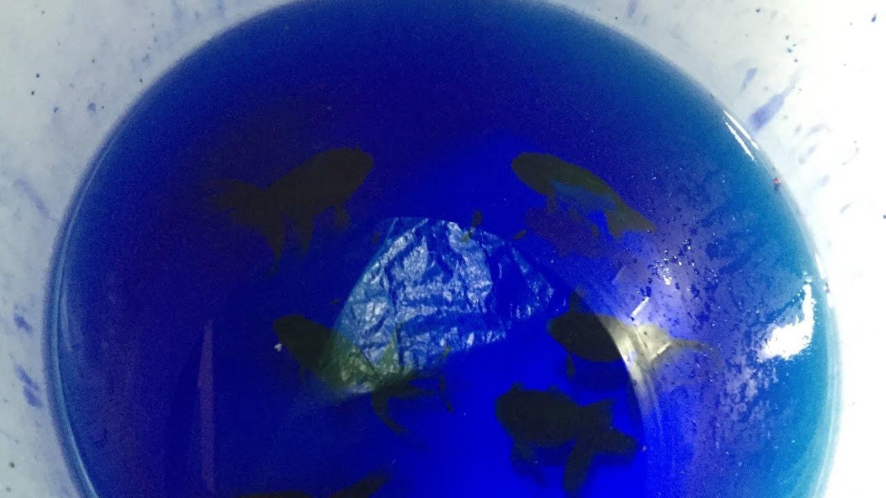 Aquaponics Dealing With Parasites Using Methylene Blue 1