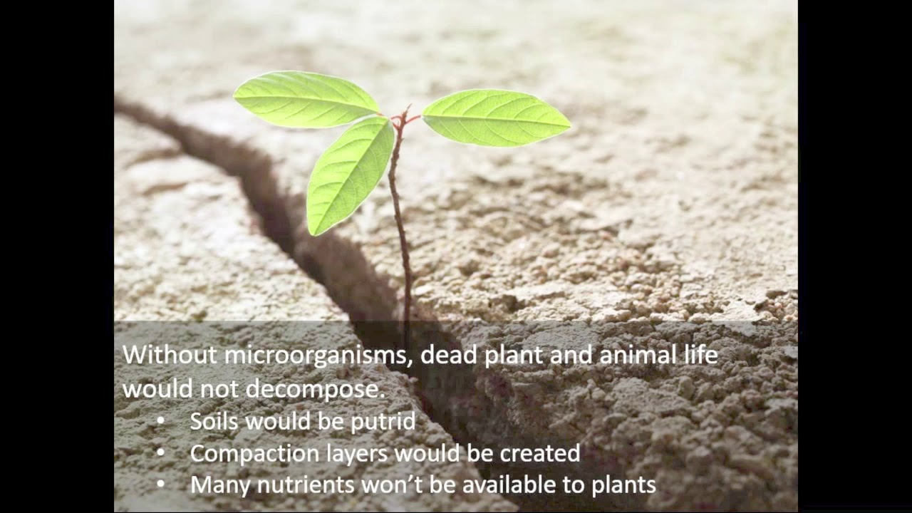 5 Types of Soil Microbes And What They Do For Plants