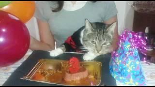 Cumpleaños de Murchik Gordi Júnior 3 años Jajaja