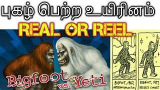 Download lagu #bigfoot #yeti #tamil   real or reeal   புகழ் பெற்ற விலங்கு   two percentage of  evidence bigfoot  