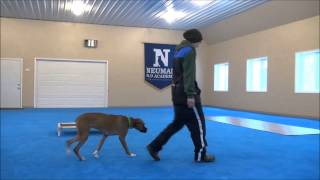 Howie (boxer) - Boot Camp Dog Training Minneapolis