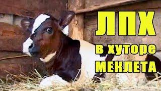 ЛПХ в хуторе Меклета