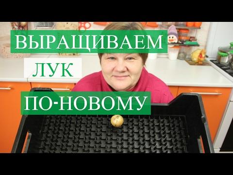 Учитель словесности: Подготовка к ОГЭ по русскому языку