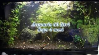 Meraviglioso  Acquario tropicale 60 litri