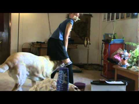porno dogs - doggiestyle from YouTube · Duration:  2 minutes 23 seconds