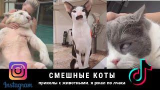 Смешные коты смешные животные видео из Tik Tok Я ржал пол часа