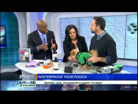 Celebrity Dog Groomer Jorge Bendersky on News Pix 11 with Tito the Pom